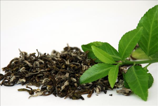 Muôn kiểu chướng ngại vật ở làm trà Việt Nam
