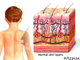 Tìm hiểu về cấu tạo da